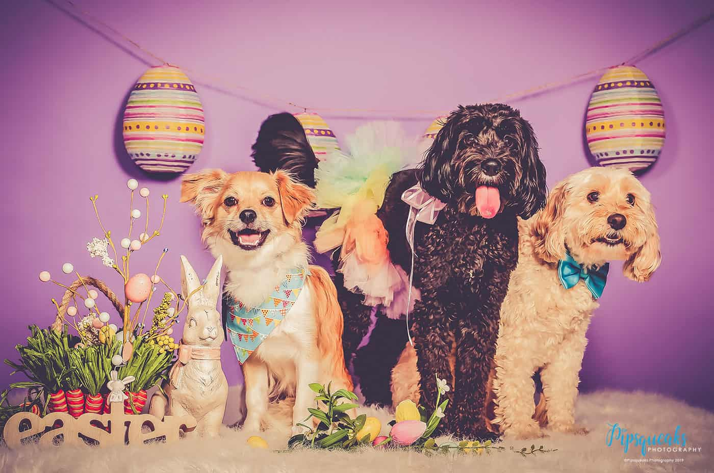 Pipsqueaks Photography, Pet photography, Pet photography Melbourne, Easter Mini photo session