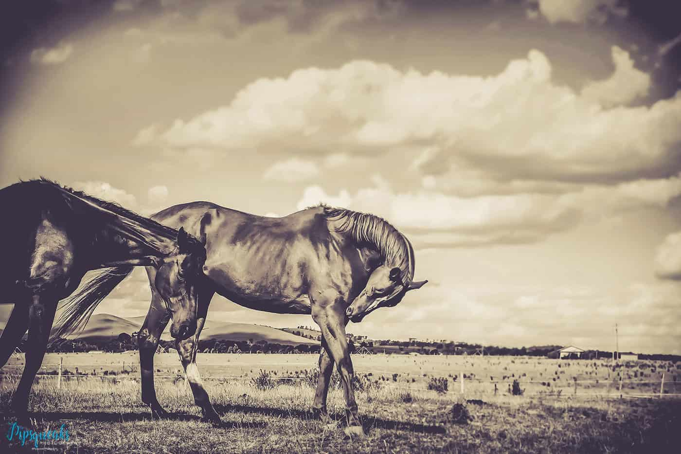 Equine photography, Horse photography Melbourne, Pet photography, Pet photography Melbourne